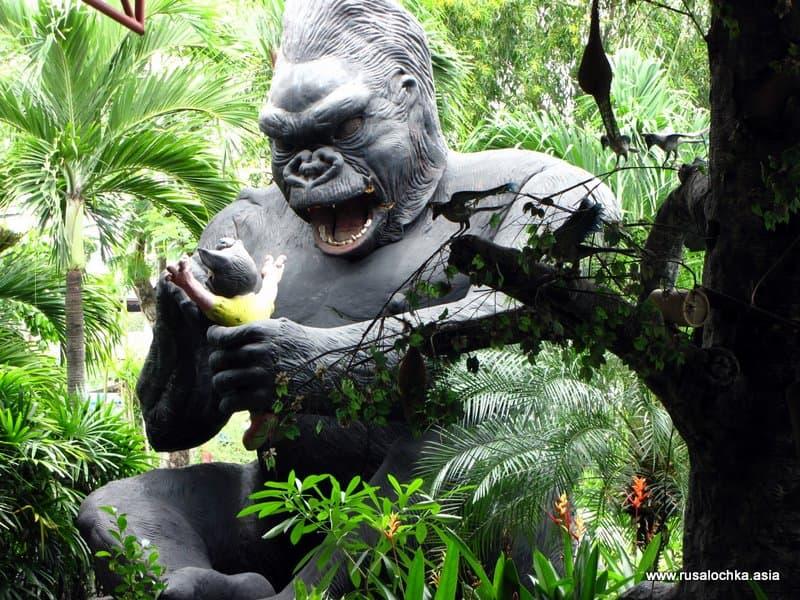 Cruise gorilla jungle