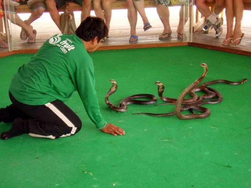 разы ферма змей в паттайе людей нашей