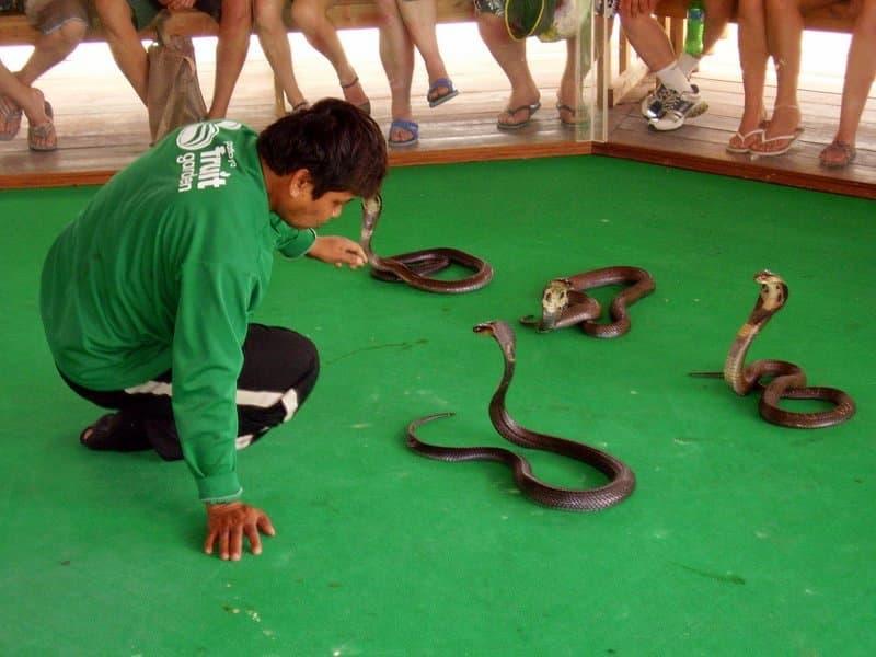 этих тканей ферма змей в паттайе отличие спортивного